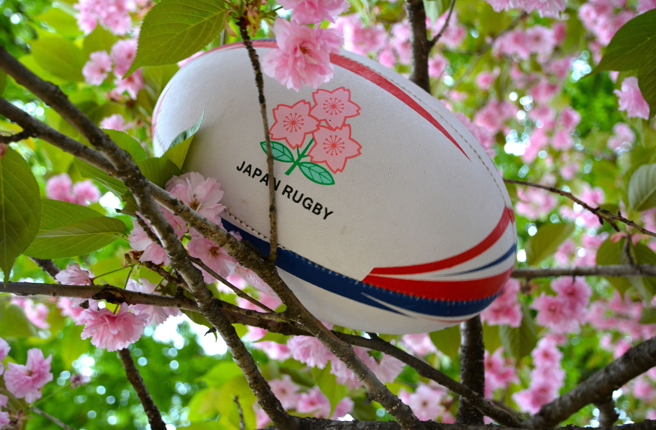 Rugby World Cup Japan betting
